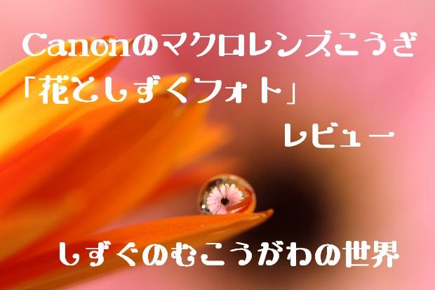 キャノン「マクロレンズ体験花としずくフォト(無料写真講座)東京